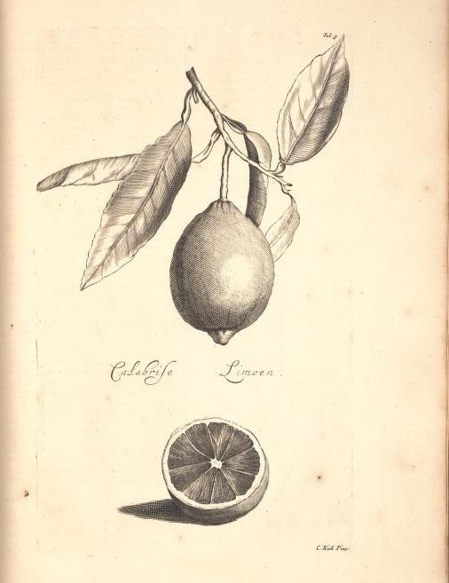 Limoen en Oranje Boomen 06a
