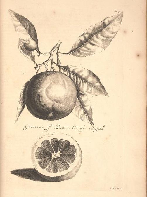 Limoen en Oranje Boomen 10a