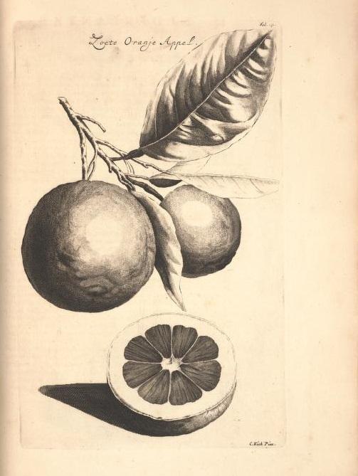Limoen en Oranje Boomen 11a