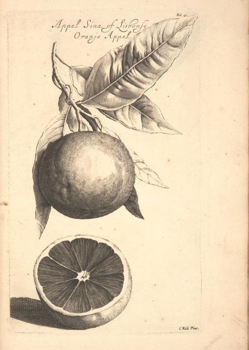 Limoen en Oranje Boomen 15a
